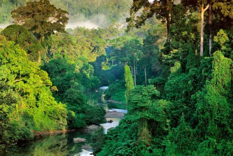 Borneo_rainforest