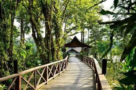 Sukau_rainforest